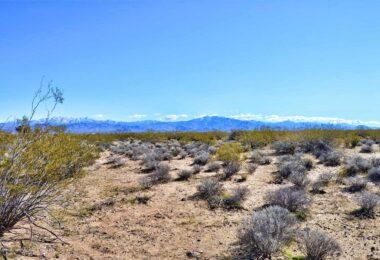 Florian Drive, Dolan Springs, AZ 86441